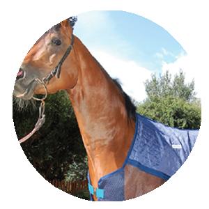 Techniche cheval