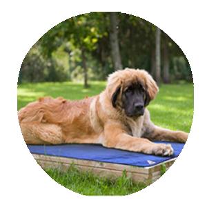 Techniche tapis chien